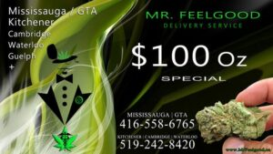 25860468 Free Gram weedmaps Mississauga kitchener cambridge waterloo ontario marijuana cannabis weed marijuana dispensary special delivery service