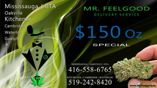 39549464 150 oz weedmaps Mississauga kitchener Oakville cambridge waterloo ontario marijuana cannabis weed Bud dispensary special best delivery service