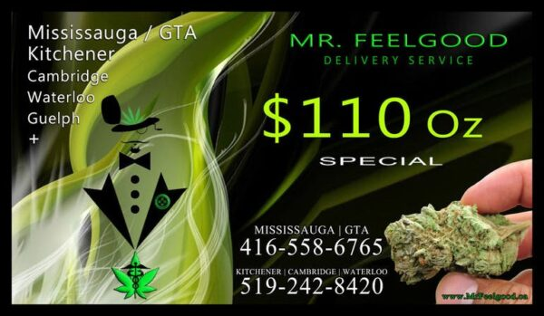 54243180  110  weedmaps Mississauga GTA Toronto  kitchener cambridge waterloo ontario marijuana cannabis weed marijuana dispensary special delivery service