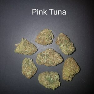 87308133 Pink Tuna AAAA Quad strain Weed Bud Dispensary weedmaps Canna West CannaWest Toronto GTA Greater Area Etobicoke North East York Downtown cannabis special delivery