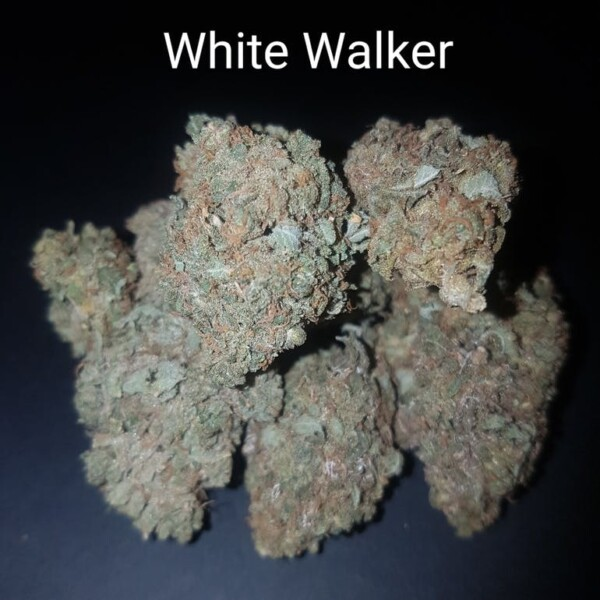 87724286 White walker AAAAA  Quad strain Weed Bud Dispensary weedmaps Canna West CannaWest Toronto GTA Greater Area Etobicoke North East York Downtown cannabis special de