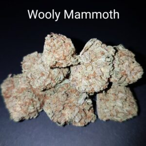 94923910 Wooly Mammoth 190